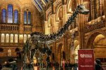 The amazing Natural History Museum